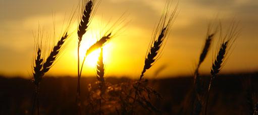 Présentation de AgroPartenaire