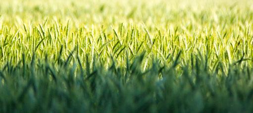 Présentation de Claye Agri