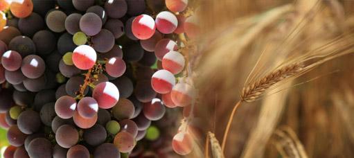 Présentation de Agri-Viti Distribution
